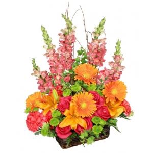 Order Brilliant Basket flowers
